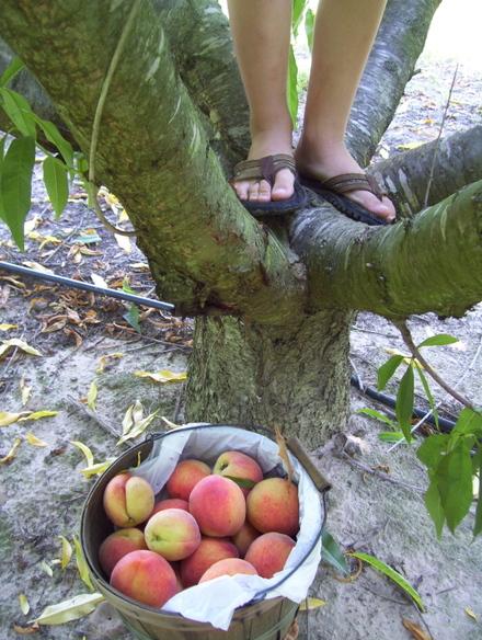 Boy_in_a_tree