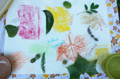 Leaf_rubbings